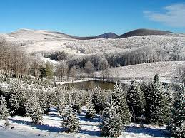 watauga county christmas tree association boone north carolina