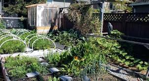 Victory Garden Layout Compact Vegetable Garden Financeintl Club