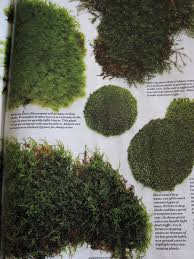 Different Types Of Japanese Gardens - mulchmaid moss garden dreams