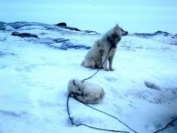 a qallunaaq in iqaluit february 2012