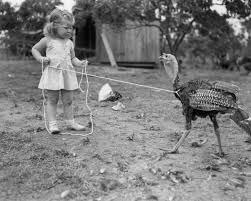 spirit halloween harrisonburg va fearsome cowgirl lassos a turkey rockingham turkey festival