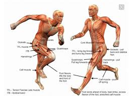 Anatomy Of A Foot The Anatomy Of A Runner It U0027s All About That Bass The Upper Leg