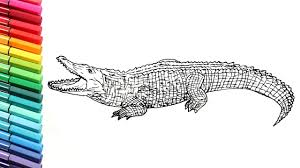 killer croc coloring pages drawing and coloring crocodile learn to draw wild animals color