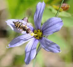 Small Black Flying Bugs In Bathroom Dr Bug U2013 Urban Pest Control Ltd U2013 Serving Southern Ontario Since