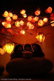 japanese lantern plant wish upon a lantern scarlet elfcup