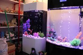 aquarium ornament artificial pink coral reef tropical marine fish