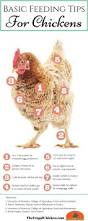 4216 best backyard chickens care u0026 health images on pinterest