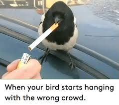 Funny Bird Memes - when your bird starts hanging with the wrong crowd funny meme on me me