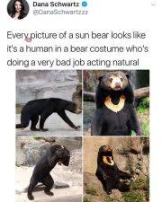 Smokey The Bear Meme Generator - a family of black bears visits the pool sharing4charity org