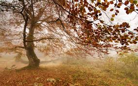 brown tree forest fog autumn tree wallpapers 1920x1200 1925657