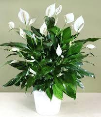 low light house plants best low light indoor plants sensible gardening and living low
