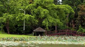 Bogor Botanical Garden by Indonesia Celebrities And News 10 Most Favorite Photographers