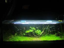 australian native aquatic plants australian native 6ft outdoor aquarium youtube