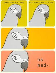 Parrot Meme - evil parrot wants 3rd comment meme by tarentules2315 memedroid