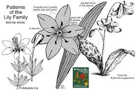 liliaceae family identify plants and flowers