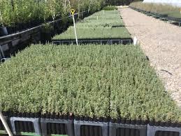 plants native to utah high mountain nursery llc