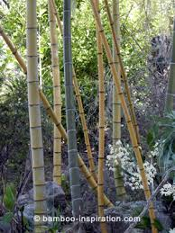 Bamboo Garden Design Ideas Bamboo Garden Plants Products And Bamboo Structures
