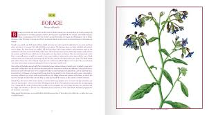 edible native plants edible wild plants and herbs a compendium of recipes and remedies