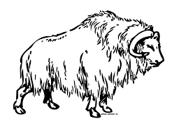 coloring buffalo
