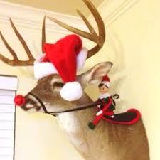 on shelf reindeer on shelf car search on the shelf