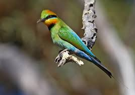 Birds In Your Backyard Check Out The Birds In Your Backyard Nacc Northern