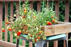 small raised box container vegetable gardening from recycled wood