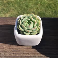 mini succulent pot planter u2013 cactus pottery