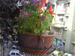 groveflora com online gardening supplies india buy flower bulbs