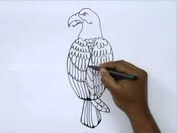 how to draw a bald eagle youtube