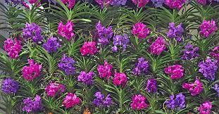 gardenlady com bio