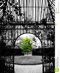 green tree in black and white background stock photo image 55249646
