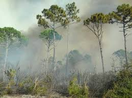 Wild Fires Near Merritt by Fire Management Canaveral National Seashore U S National Park