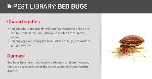 Chicago Bed Bug Experts Bed Bug Prevention U0026 Indentification Copesan Pest Library