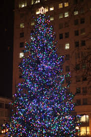 christmas tree in portland oregon photography holly copeland