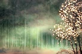 sparkling nature green sparkling lights trees forest