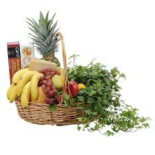 cheese basket fabulous fruit cheese basket tmf 504 in louis mo alex