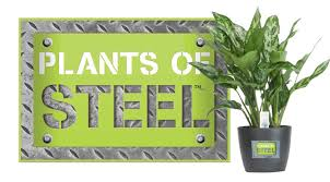 Easy To Care For Indoor Plants 9 Low Maintenance Plants For The Office Inhabitat Green Design