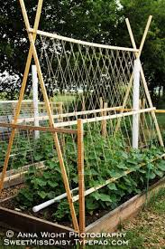 easy pea trellis cucumber trellis and pvc watering system as well as other useful