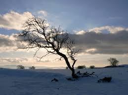 file leafless tree in at blackburn with darwen lancashire 03