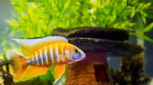 how to clean fish tank accessories aquarium care