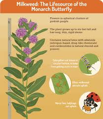 gardening for butterflies care2 healthy living