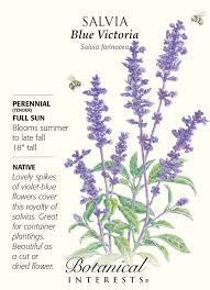 native plants victoria amazon com salvia