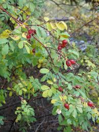 plants native to colorado colorado native plants the squirrel nutwork