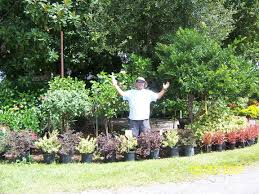 native plants ohio central florida nursery florida landscape plants pell u0027s citrus