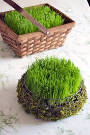 easter basket grass create an easter basket filled with real grass in 5 days easter