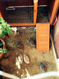 Raising Quail Backyard 252 Best Quail Pigeons Images On Pinterest Quails Chicken And