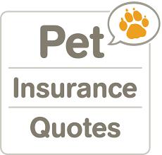 dog insurance quotes comparison raipurnews