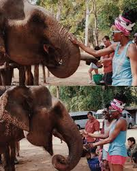 elephant time byebyegointothai day 4 u2014 she the adventurous