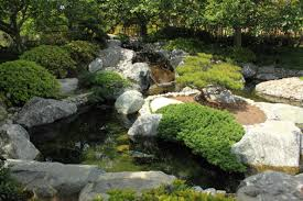 japanese garden design with koi fish pond decorate with natural stone