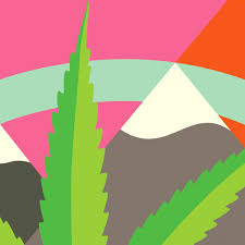 the great colorado weed experiment the new york times